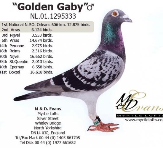 GOLDEN GABY