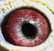 Eye of 43178