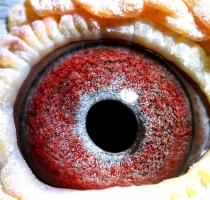 45891 eye