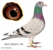 WITPEN WITTENBUIK SA - BELG 98/3020316